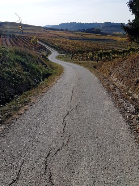 The Way Forward Narrow Road On The Road Langhe Roero Piedmont Italy Tranquility Autumn Outdoors Landscape Day No People Sky Nature