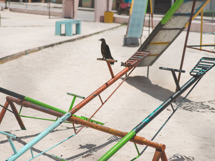 Bird perching on seesaw during sunny day