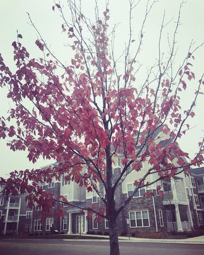 Tree Nature No People Beauty In Nature Day Building Exterior