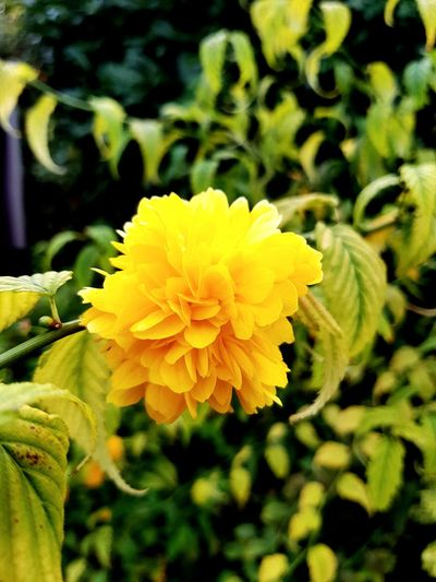 Flower Yellow Nature Plant Freshness Beauty In Nature Petal Flower Head Fragility Close-up Growth Outdoors Day No People Second Acts Perspectives On Nature