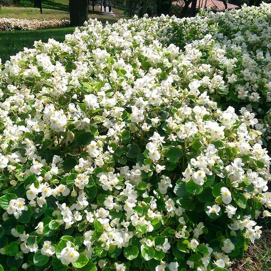 Istanbul Emirgan Park Koru color nature manzara doga travel turkiye turkey flower white cicek