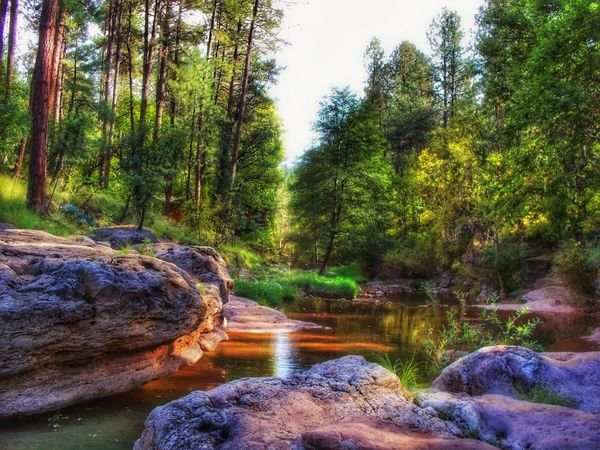 Trees, rock formations, creek. Tree Nature Forest Tranquility Tranquil Scene Beauty In Nature Rock - Object No People Trees And Nature Trees And Water Backgrounds Scenic Photograghy Editorial  Scenic View Creekside Rock Formation Colorful Trees Day Scenics Outdoors Water Growth Landscape Sky EyeEmNewHere The Great Outdoors - 2017 EyeEm Awards Neighborhood Map An Eye For Travel