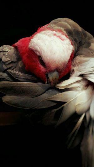 Bird Grooming Nature_collection Florida Bird Photography Birds Of EyeEm  Birds_collection Nature's Diversities