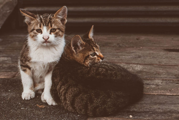 Pets Domestic Cat Domestic Animals Animal Cute Animal Themes Portrait Mammal One Animal Looking At Camera No People Indoors  Feline Day Nature Close-up