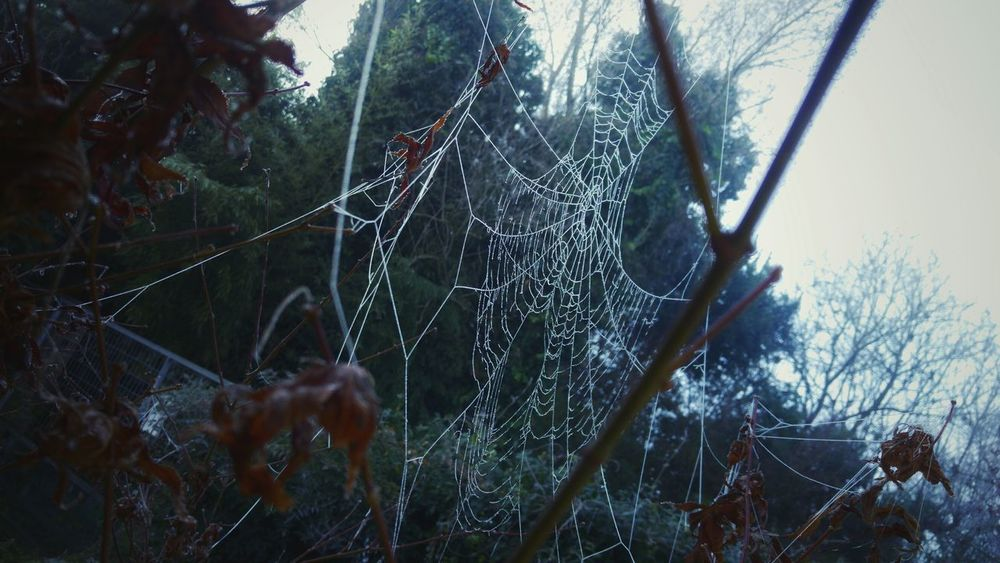 Spiderweb In Morning Dew Spider Web Outdoors Close-up Dew Drops No People Animal Themes Nature Morning Cold Humidity