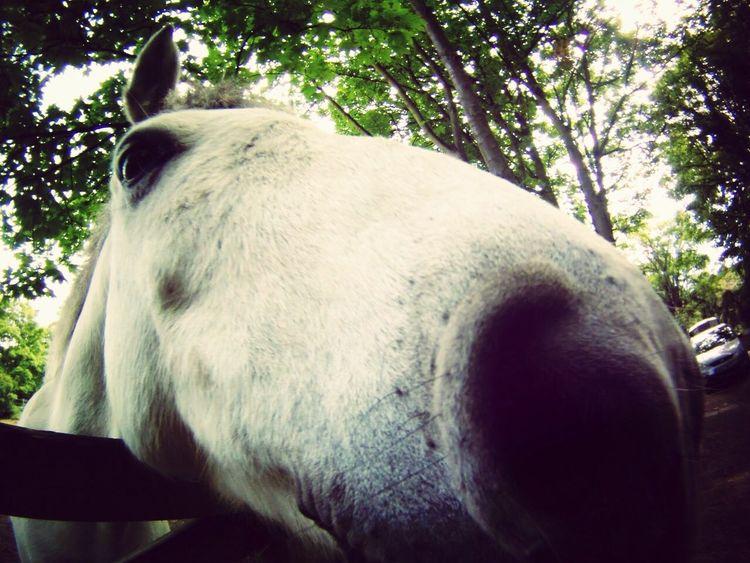 Horse Animal Close Up Nose