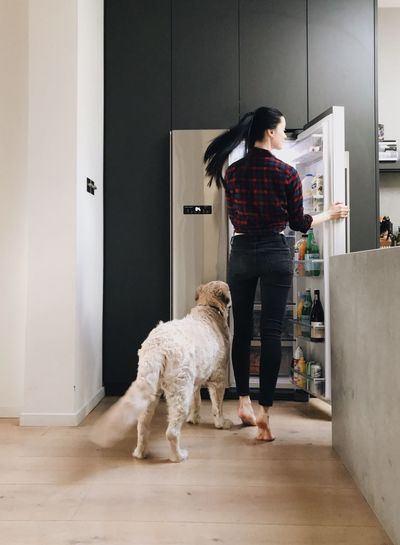 Dog Ready-to-eat Interior At Home Kitchen Pets Full Length Domestic Animals One Animal One Person Real People Lifestyles