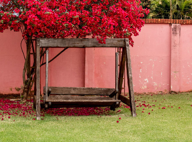 Rustic Day Empty Seats Green Grass No People Outdoors Red Red Flowering Tree Red Flowers On Lawn Wooden Swing