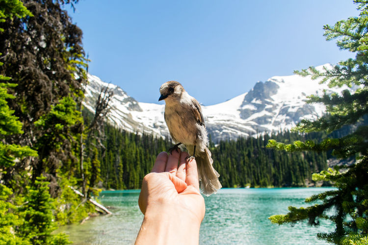 Man holding bird on hand