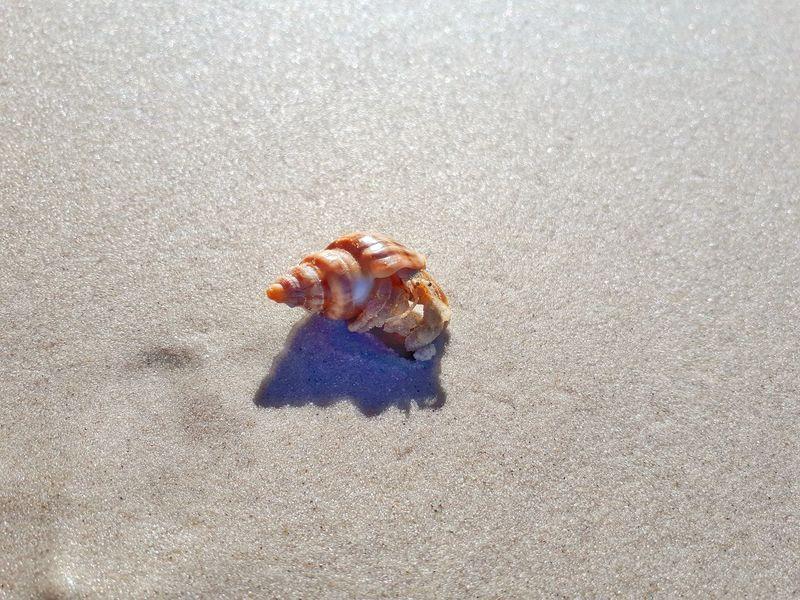 Sand Beach Animal Themes Nature Sea Life Close-up EyeEm Selects Surf Travel Australia Simple Things In Life Coastline EyeEmNewHere Sanscrab Simple Photography