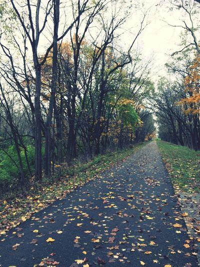 Walking through Fall!!