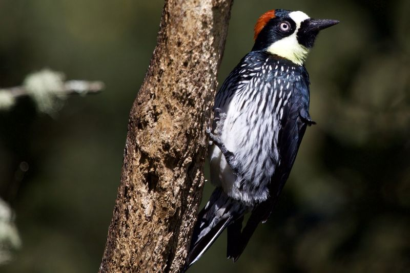 Animal Themes Bird Animal Animal Wildlife Animals In The Wild One Animal Vertebrate Tree Focus On Foreground No People Perching Close-up Woodpecker Tree Trunk Nature Trunk Day Outdoors Plant Branch Profile View