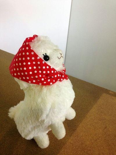 Alpaca Toy Photography Cute KAWAII