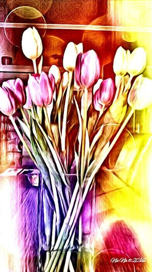 Urban Spring Fever Taking Photos Check This Out My Point Of View Flower Collection Tulips....