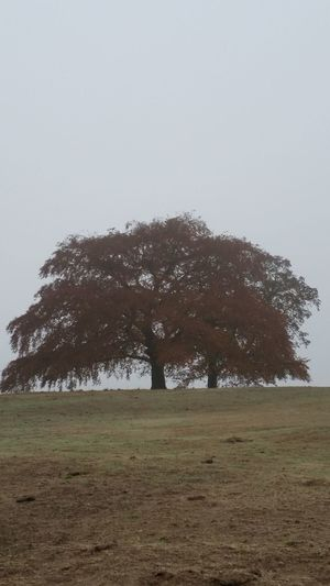 Autumn colors Hampstead Heath London Misty Beauty In Nature Blue Sky And Clouds Day Field Foggy Greyscale Hampstead Heath Ponds Land Landscape Nature Outdoors Plant Scenics - Nature Sky Tranquil Scene Tranquility Tree
