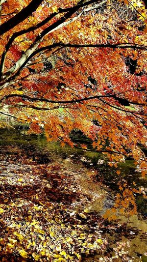 autunno sui rami Autumn Autumn colors Autumn🍁🍁🍁 Tree Backgrounds Full Frame Pattern Textured  Abstract Close-up Tranquil Scene EyeEmNewHere