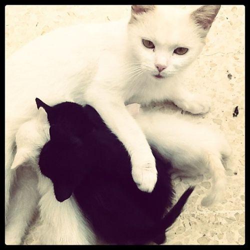 9tatess ?? Mo5nena 5arnena Ka7louch Ka7lon mimitta cats instacats lovecats catfamily miaou instaanimal instacool