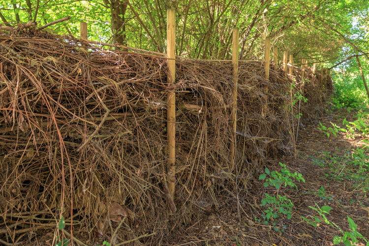 Stack of bamboo trees in forest