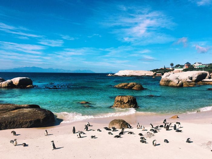 Penguins At Beach Against Sky