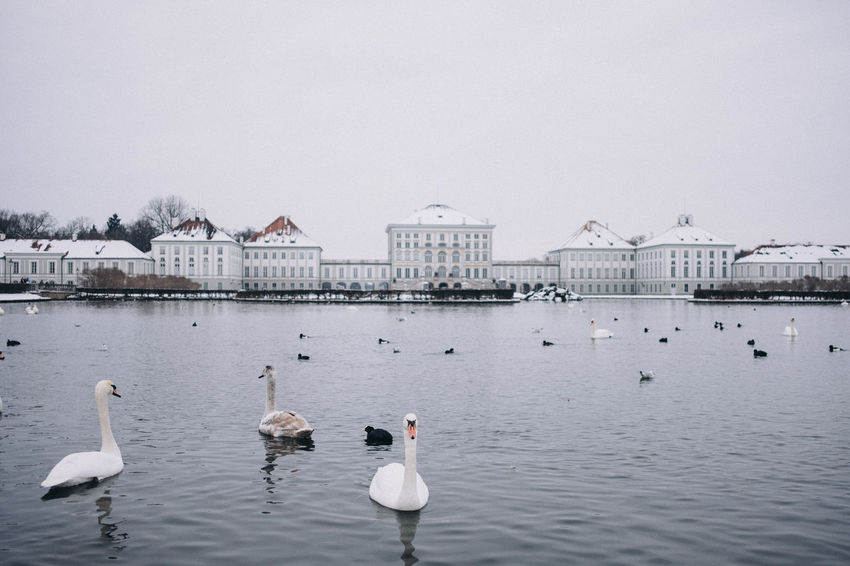 Nymphenburg Palace in winter, Munich, Bavaria, Germany. Bavaria Copy Space Horizontal Munich Nymphenburg Palace Tourist Attraction  Travel Photography Winter Animal Themes Animal Wildlife Animals In The Wild Architecture Beauty In Nature Bird Building Exterior Built Structure Day Europe Germany Lake Landmark Large Group Of Animals Nature No People Outdoors Schloss Nymphenburg Sky Snow Swan Swimming Symmetry Travel Destinations Water Water Bird Waterfront