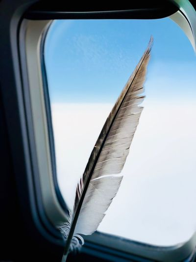 Close-Up Of Feather By Window In Airplane