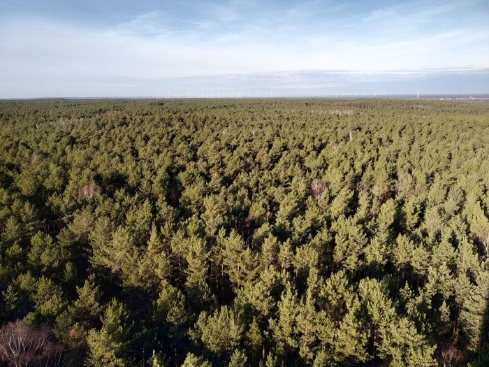 High angle view of trees on field against sky
