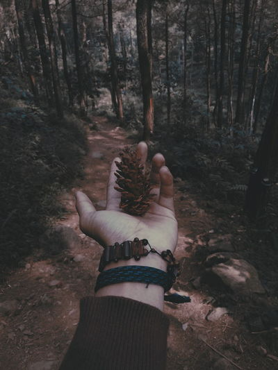 Low angle view of hands on tree trunk in forest