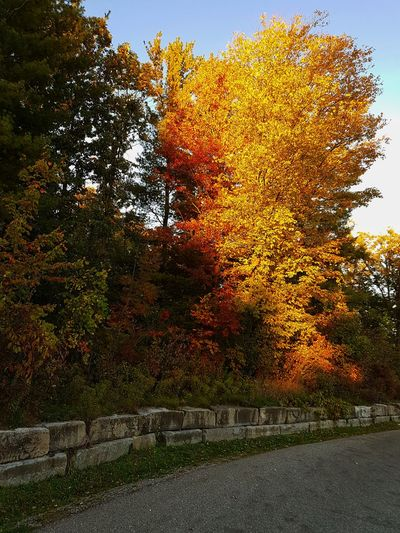 Fall is here. Tree Sky Close-up Fall Tranquil Scene Autumn Scenics Calm Leaves Tranquility Non-urban Scene Sunset Woods Fallen