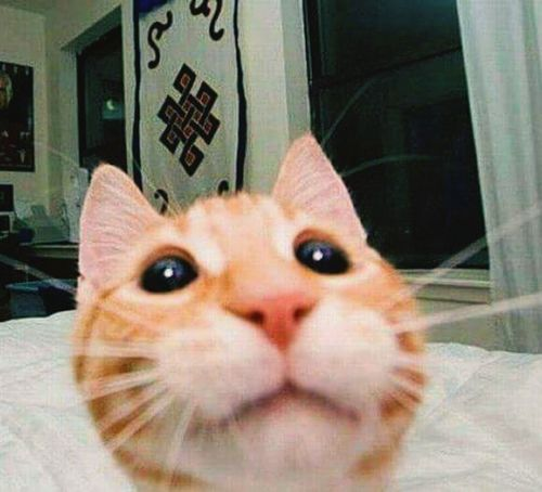 Animallovers Cute Animals Cats 🐱 Catoftheday CatEyeEm Taking Selfie Cuteness Animalscute Mybaby❤ Home Sweet Home Having Fun
