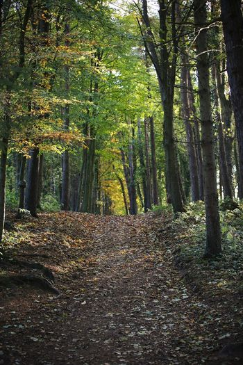 Forest Trail Walking In The Woods Outdoors Beauty In Nature No People Scotland Woods Trees Alone Tranquility Peace And Quiet Green Yellow Nature_collection Naturelovers Inspiring Recharge At One With Nature Scenics Autumn Colors Secret Places Landscape Dense Day