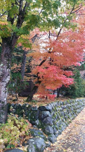 autumn charm Day Outdoors Growth Multi Colored Tree Nature No People