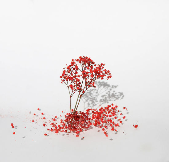 Better Look Twice Blooming Blossom Botany Flower Flower Head Focus On Foreground Fragility Freshness Growing Growth In Bloom Myuniverse Nature New Life Petal Pink Color Red Springtime Stem Studio Shot Welcometomyworld Selfmade