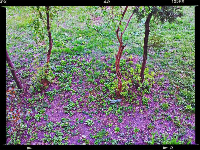 Purple flowers growing on tree
