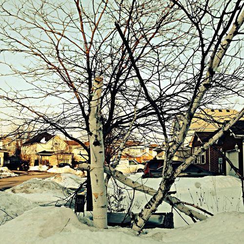 Winter Tree And Sky Beautiful Bark Scenery