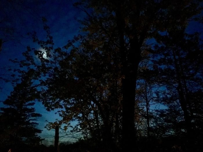 Spring Night Tree Tree Trunk Low Angle View Nature Forest Beauty In Nature Outdoors Scenics Sky Night Growth Tranquility Tranquil Scene No People Blue Branch EyeEmNewHere