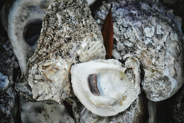 Oyster shells No People Close-up Full Frame Nature Backgrounds Low Angle View South Louisiana Oyster Shells Copy Space Textures And Surfaces Texture In Nature Texture