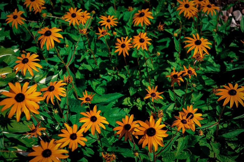 High angle view of orange flowering plants