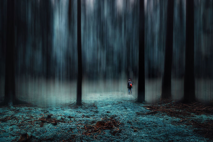 Man standing by trees in forest during foggy weather