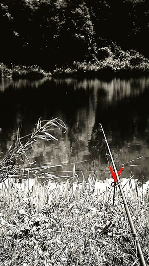 Fishing Relax Lake Kozármisleny Red