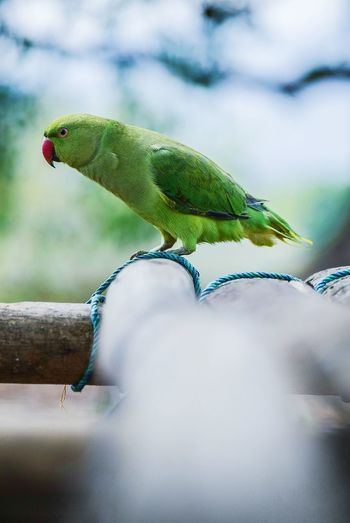 Animal Wildlife Green Birds Of EyeEm  Parrot Beauty In Nature Portrait Birds Of EyeEm  Indoors  Nature Close-up Birds Of EyeEm  Outdoors Sky Bird Animals In The Wild One Animal Animal Themes No People Reptile Day Nature