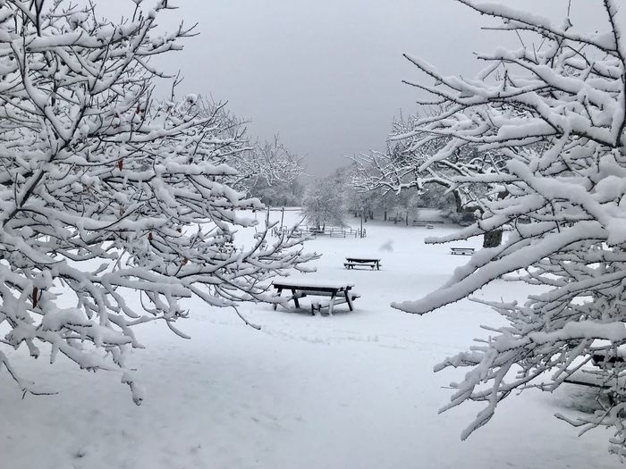 Winter Snow Cold Temperature Tree Weather Nature Beauty In Nature White Color Cold Frozen Scenics Landscape Tranquil Scene Tranquility No People Bare Tree Branch Outdoors