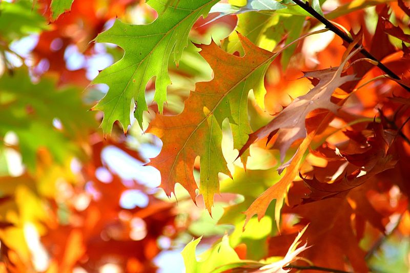 Nature Photography Autumn colors Autumn Leaves Plant Part Leaf Plant Tree Autumn Change Nature No People Branch Growth Beauty In Nature Orange Color Outdoors Day Close-up
