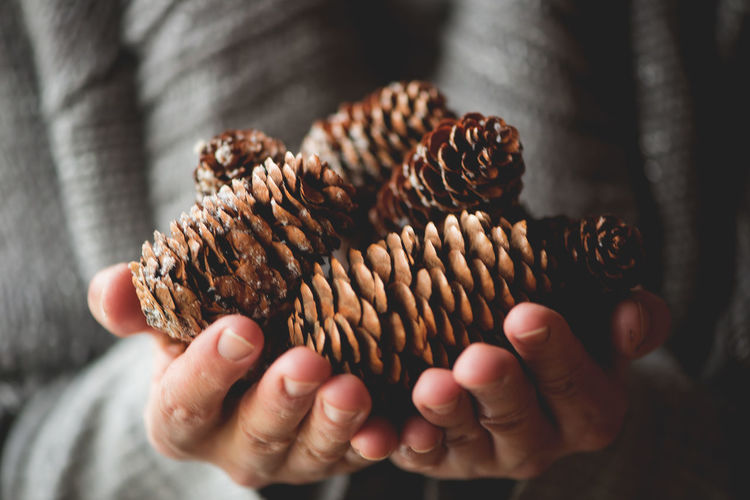 Human hands with pine cones Celebration Christmas Decor Holiday New Year Pinecones Winter Background Backgrounds Close-up Cone Cones Day Decoration Focus On Foreground Gray Background Holding Human Body Part Human Hand Indoors  One Person People Pine Cone Pinecone Real People Fresh on Market 2017 Be. Ready.