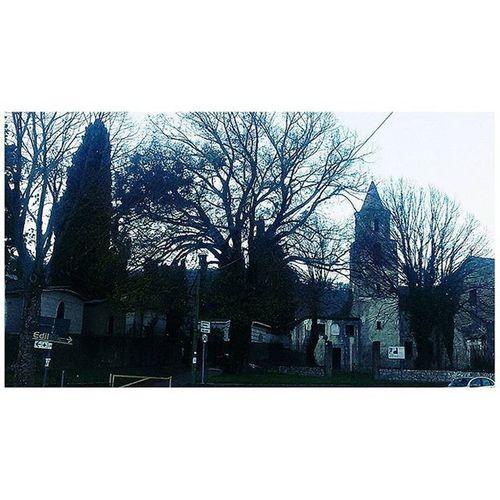 Forino Tree Trees Autumn Autumnleaves Autumnlife November Old Shadow Moment Ig_avellino Paesaggiirpini Av Avellino Igers Italia Moment Pictures Picoftheday L4l Likeforlike Followforfollow Followme