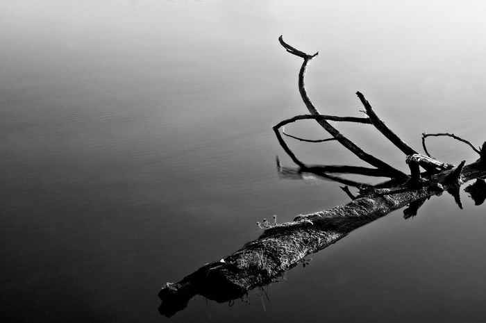 Beauty In Nature Black And White Close-up Day Growth Leaves Nature No People Outdoors Plant Scenics Sky Standing Water Tranquil Scene Tranquility Twig Water Weather