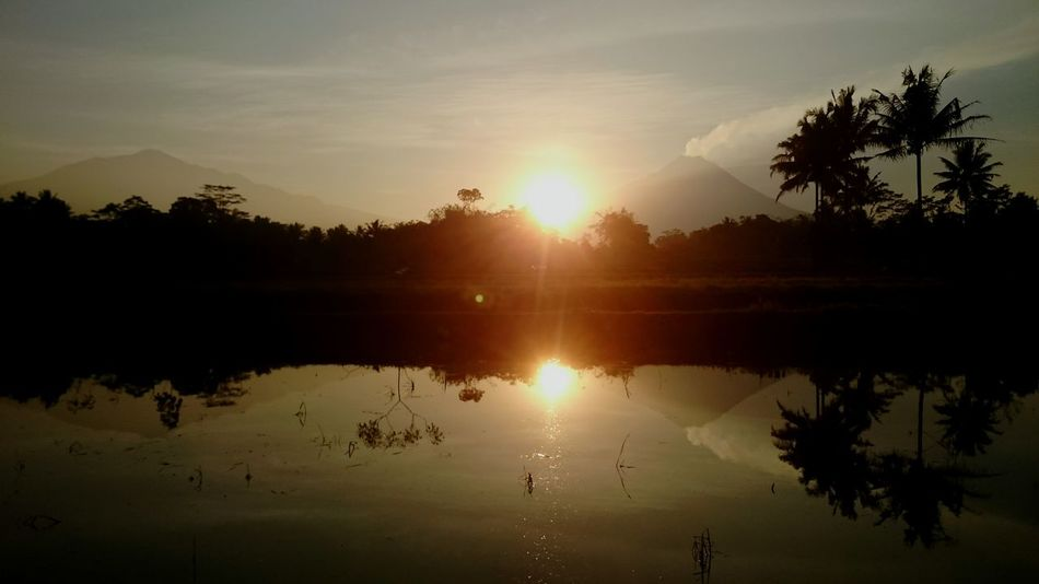 Reflection Tree Sunset Water Sun Tropical Climate Nature Morning Sky Landscape Sunlight Tranquility Silhouette Outdoors No People Palm Tree Beauty Backgrounds Merapi Merbabu Merbabu Mountain EyeEmNewHere The Week On EyeEm Lost In The Landscape