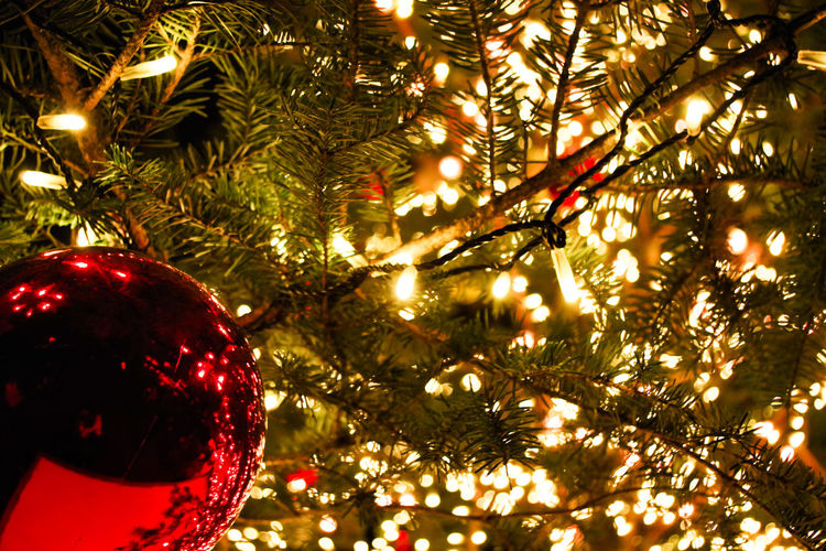 Christmas Christmas Tree Christmas Decoration Celebration Tree Christmas Lights Christmas Ornament Decoration Illuminated Low Angle View Tradition Holiday - Event Night Hanging Bauble Vacations No People Celebration Event Close-up Indoors  横浜 赤レンガ倉庫