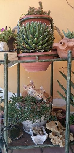 Garden Catsagram My Little Cat☺ Cactus Colors Southitaly