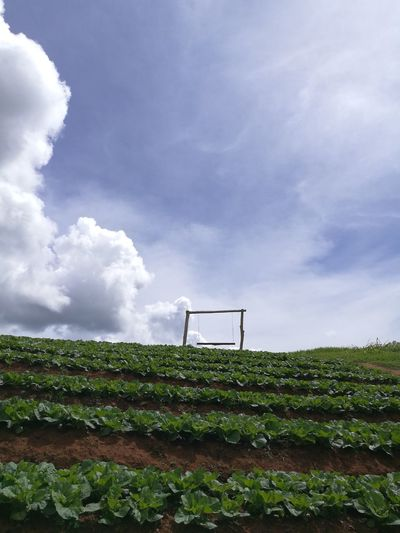 swing on farm Hanging Out Check This Out Relaxing Sky And Clouds Enjoying Life Cheese! Mon Jam Chiang Mai | Thailand
