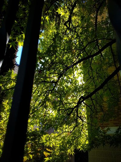 City Walks Tree Growth Nature Day Beauty In Nature Green Color Branch Outdoors Tree Trunk Sunlight Tranquility Sky
